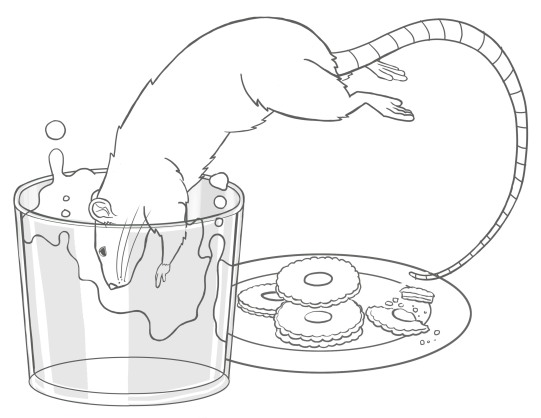 rat_02_rev