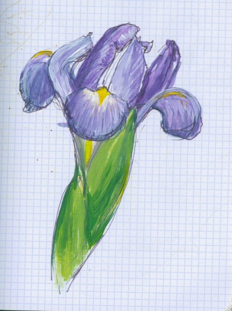 sketchBook_Iris
